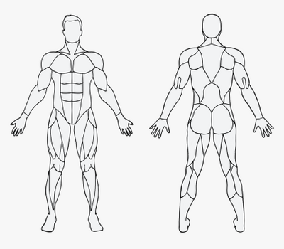 247-2477163_blank-muscles-in-the-body-hd-png-download - Copy.png